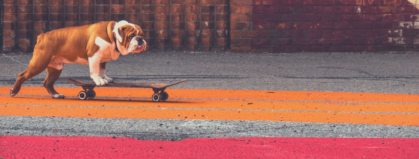 dog on skate board