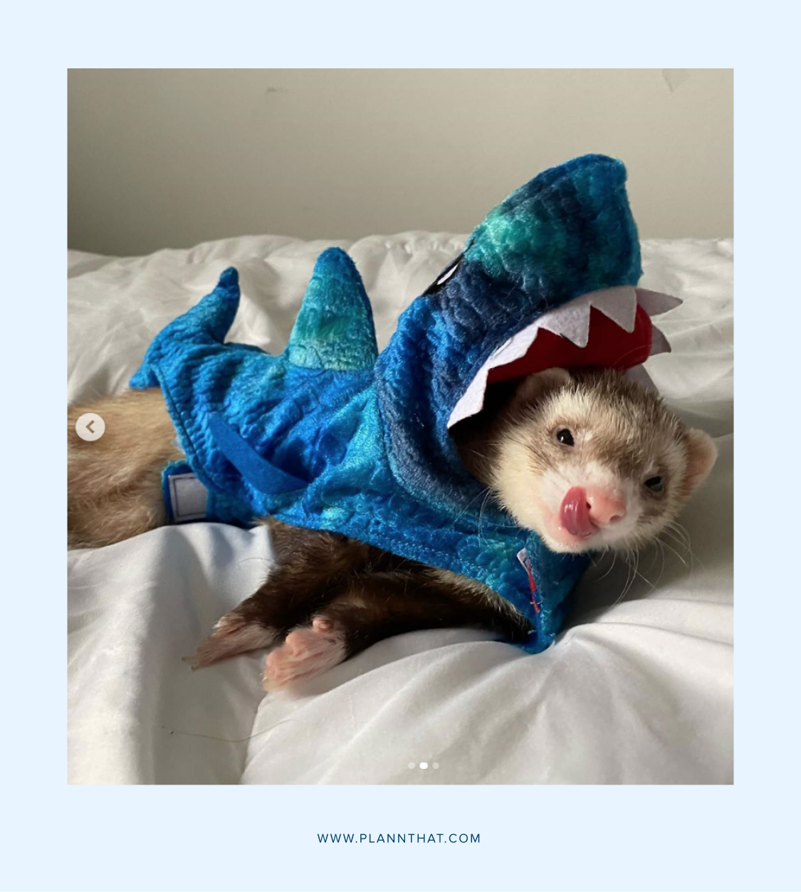 Post your pet in a costume