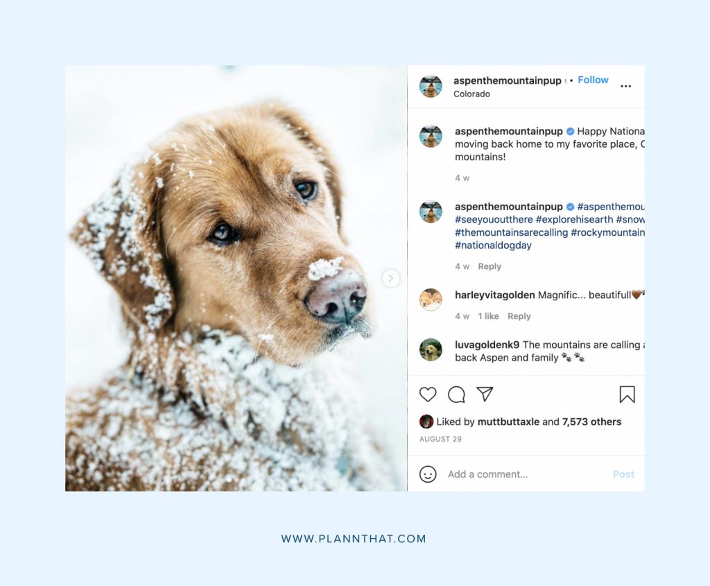 Dog Instagram account