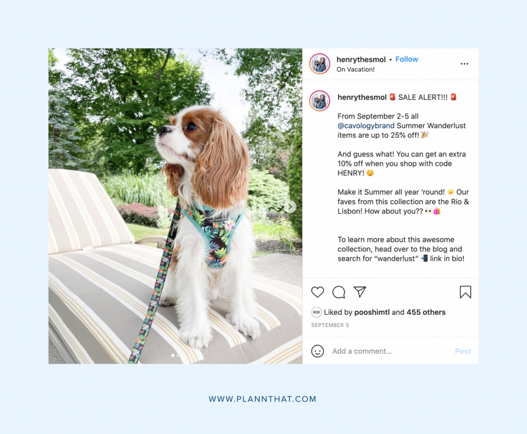 Famous Instagram dogs