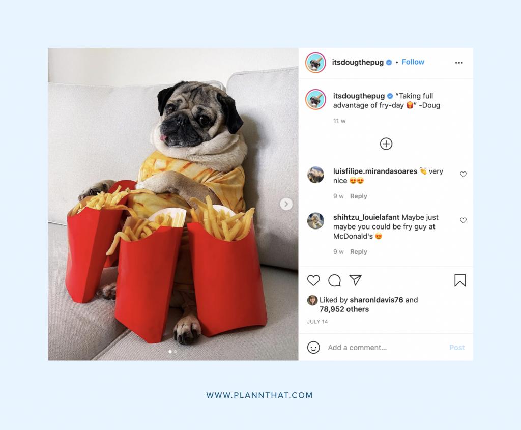 Dog accounts on Instagram
