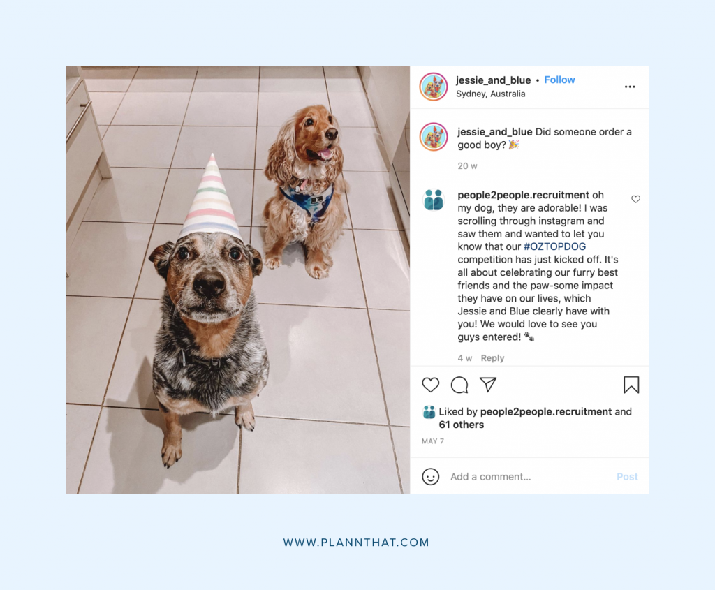 Dog pages on Instagram