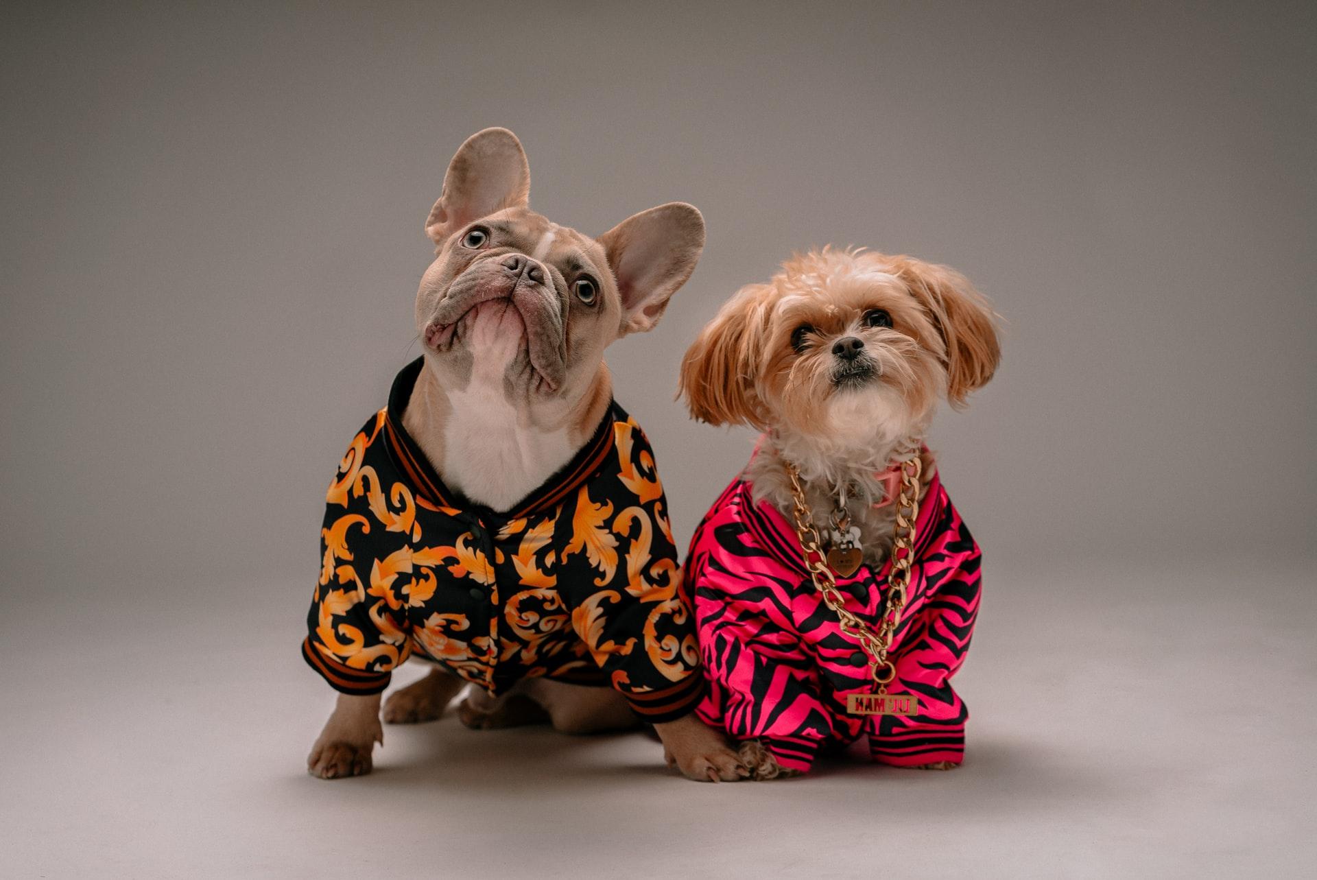 10 Delightful Dogs To Follow On Instagram