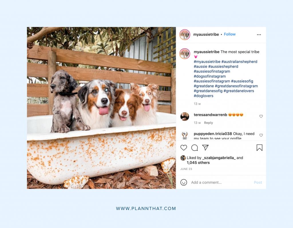 Instagram dog photos