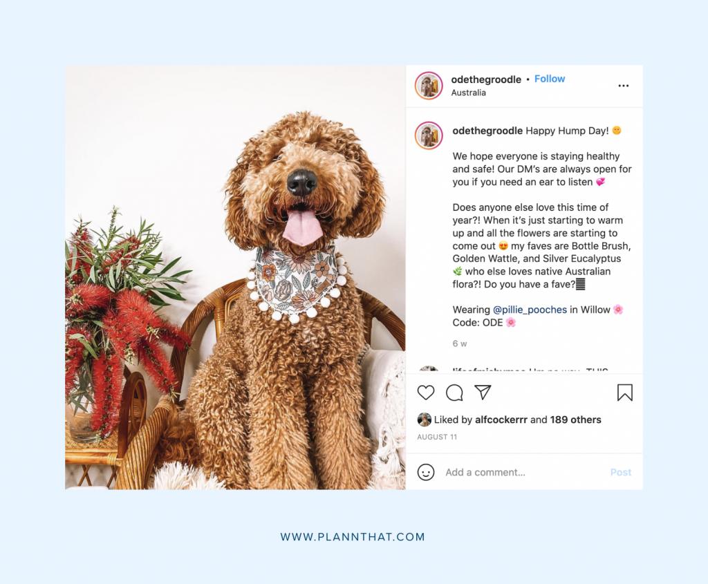 Dog Instagram pages