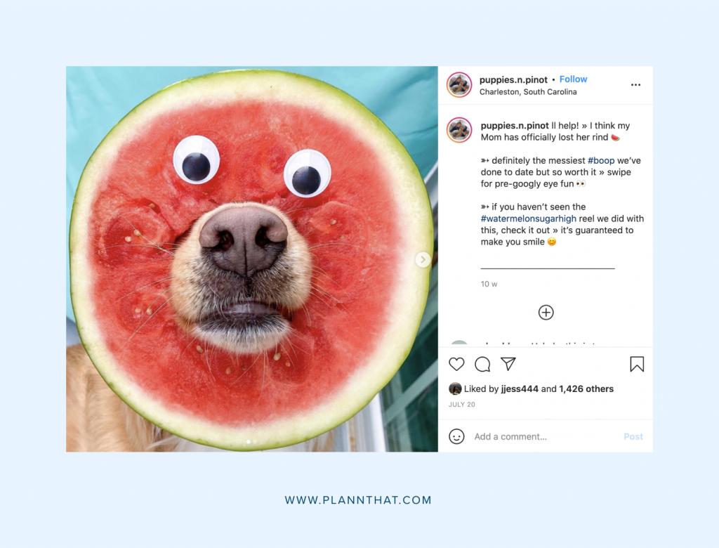 Dog for Instagram
