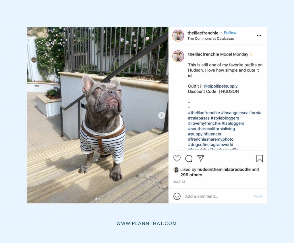 Instagram for dogs